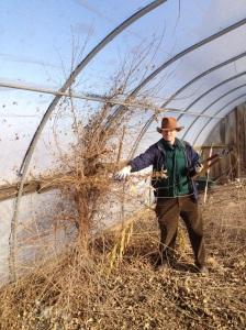 farmer gregg pulling weeds