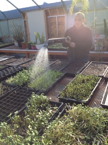 student watering sprouts