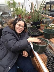 planting snap peas