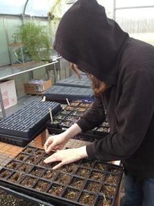 student transplanting tomatoe seedling