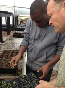 another student  transplanting seedlings