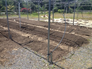 forming raised beds
