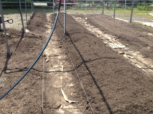 rows of raised beds