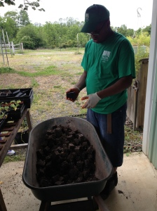 horticulture student empties seedlings from soil