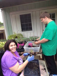 preparing jalapeno pepper plants for planting