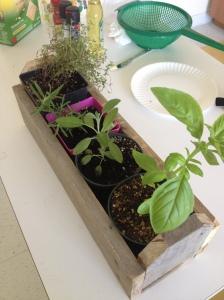 farm herbs