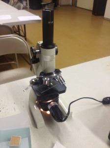 analyzing soil with a microscope