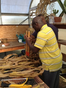 cutting corn husk
